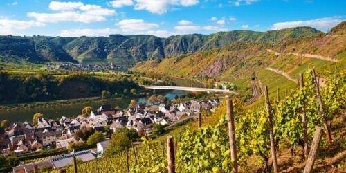 curso vinos alemania