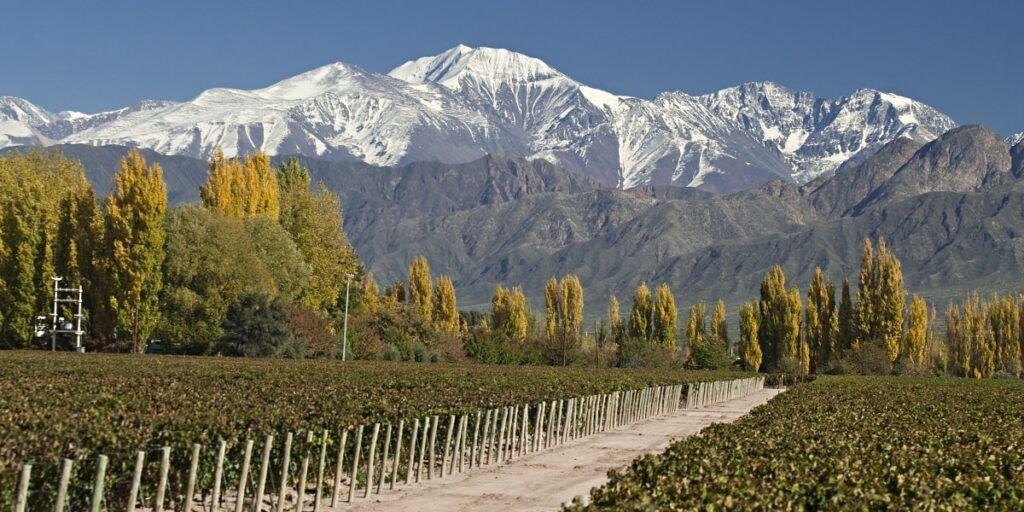 curso vinos argentina
