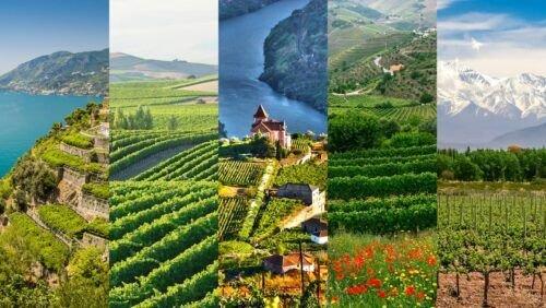 El Terruño y su influencia en los vinos foto portada curso terrior