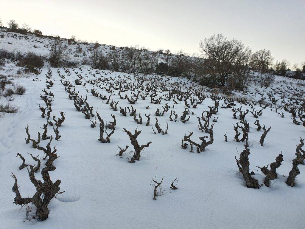 La Nieve: el precioso manto blanco que envolvió a la viña 20210112 174418
