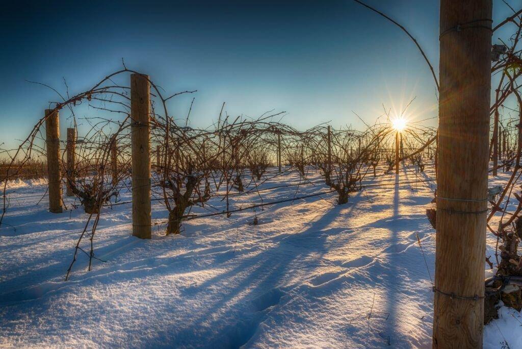 La Nieve: el precioso manto blanco que envolvió a la viña DSC6539 Editar