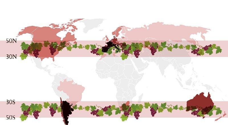 Viejo Mundo vs Nuevo Mundo franja vino